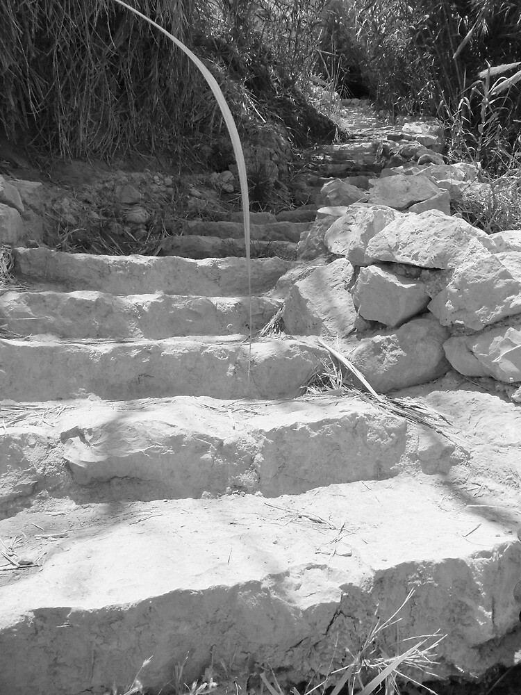 Steps by Adam Isaacson