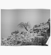 Lonesome Tree Poster