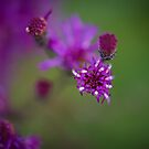Purple Things by Christopher Gaines