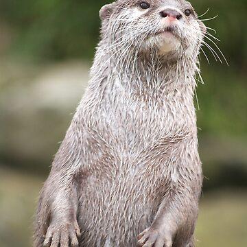 Otter by DanRedrup