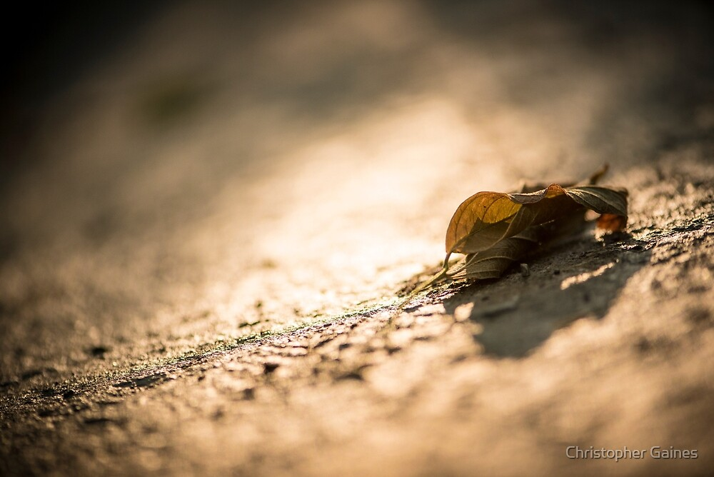 Fallen in Sunshine by Christopher Gaines