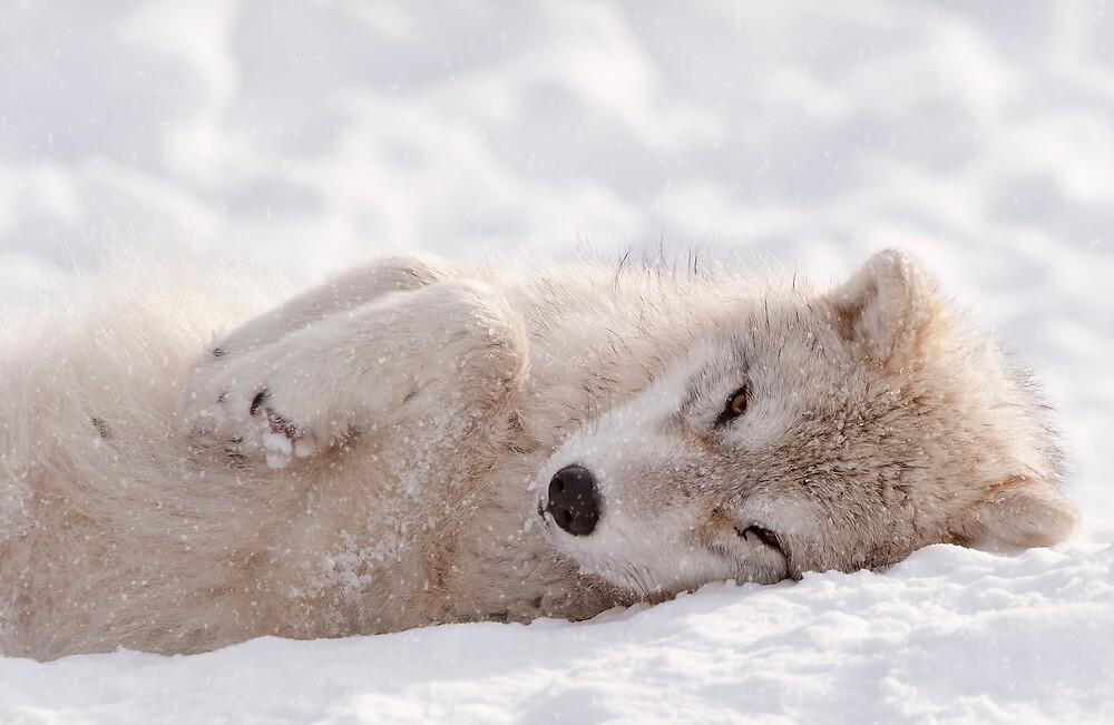 Sleepy Time by Bill Maynard