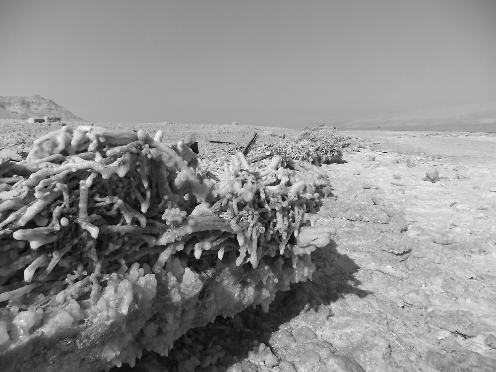 Salty Branch and Dead Sea by Adam Isaacson