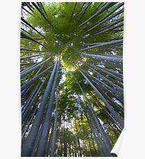 Bamboo Forest Walk Poster