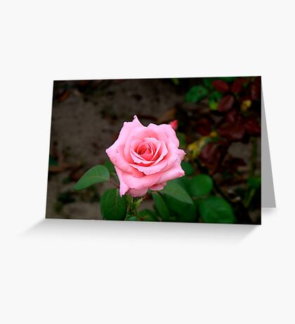 A Rose By Any Other Name.... Greeting Card