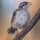 Baby Sparrow by Barbara Manis