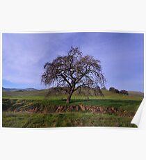 Los Vaqueros Watershed  •  Livermore, California Poster
