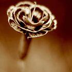 Carnation by SpiralPrints