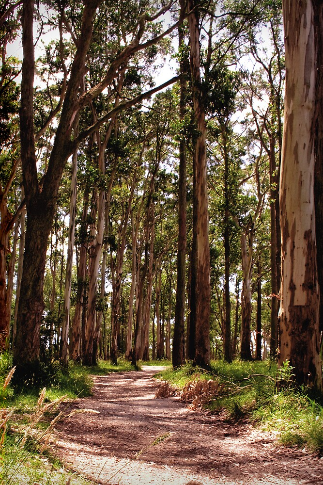 Dandenong Ranges National Park - Mountain Ash by John Bullen
