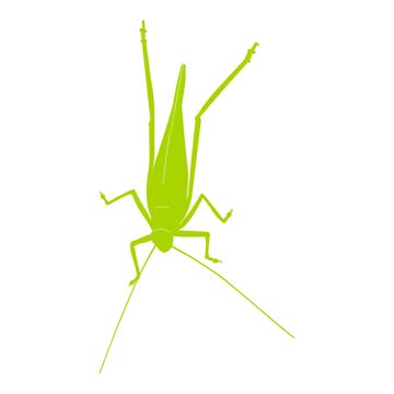 Grasshopper by sjaros