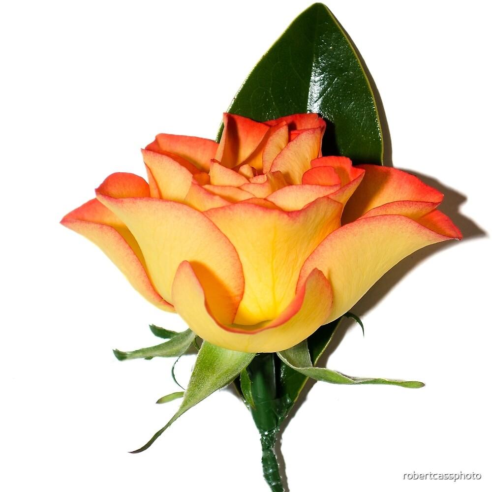Yellow & Red Rose by robertcassphoto