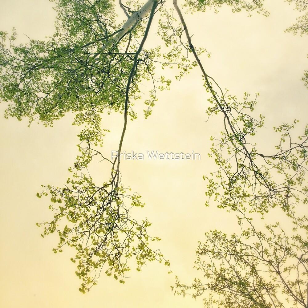 Spring foliage by Priska Wettstein