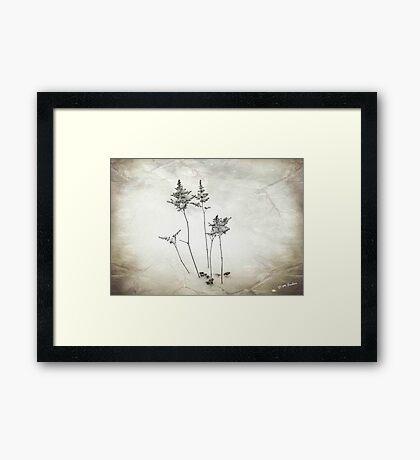 Little Trees © Framed Print