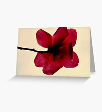 Red hot magnolia Greeting Card