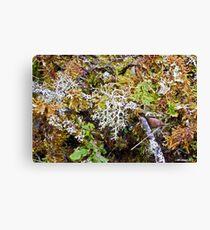 Lichen & Moss Profusion Leinwanddruck