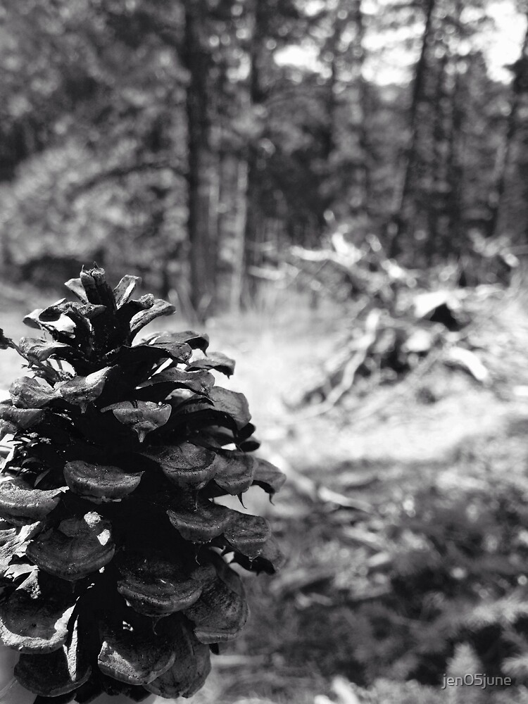 Pinecone in Black and White by jen05june