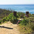 Del Mar Ocean View  by Heather Friedman