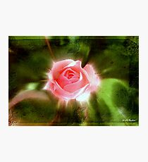 Spring Glow © Photographic Print
