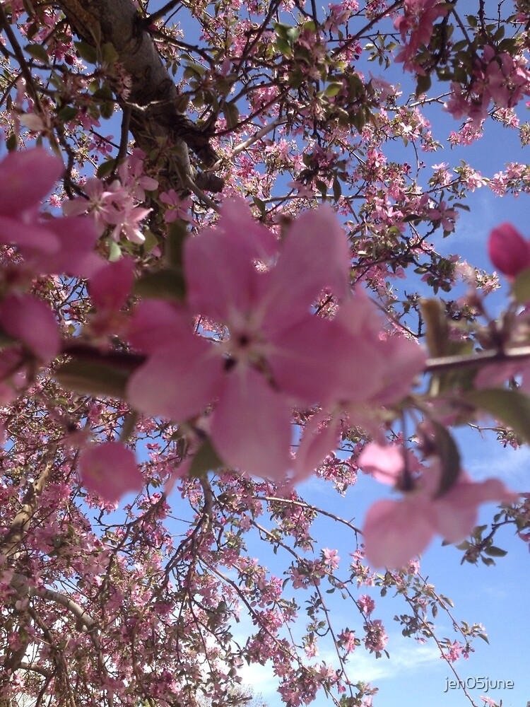 Crab Apple Blossoms  by jen05june