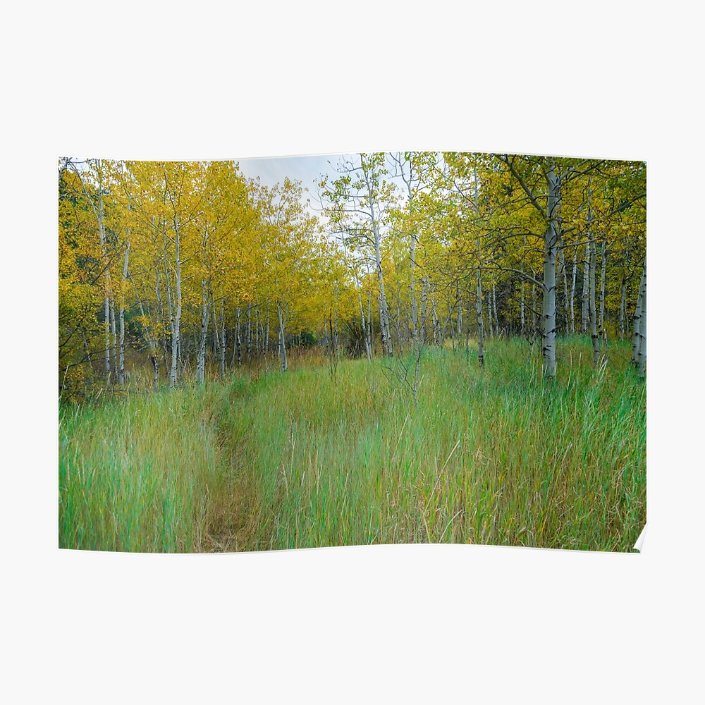 Tall Green Grass of Home Poster