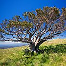 The Lonely Snow Gum by Richard  Windeyer