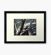 Capuchin Monkey 2, Gauteng, South Africa Framed Print