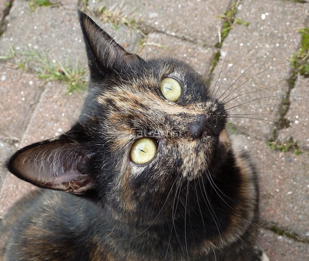 Carmen by Cat-Artist