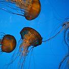 Sea anenome II by TrueInsightsNZ