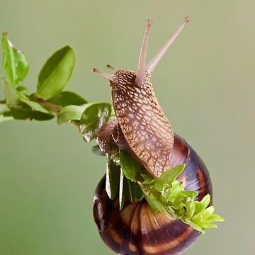 snail curious about sprig by JeanLender