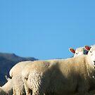 Sheep on alert by TrueInsightsNZ