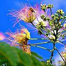 Silk Tree Buzz by Rinaldo Di Battista