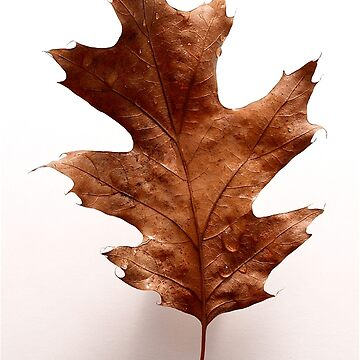 maple leaf by JeanLender