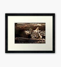 Red Wolf Watching Framed Print