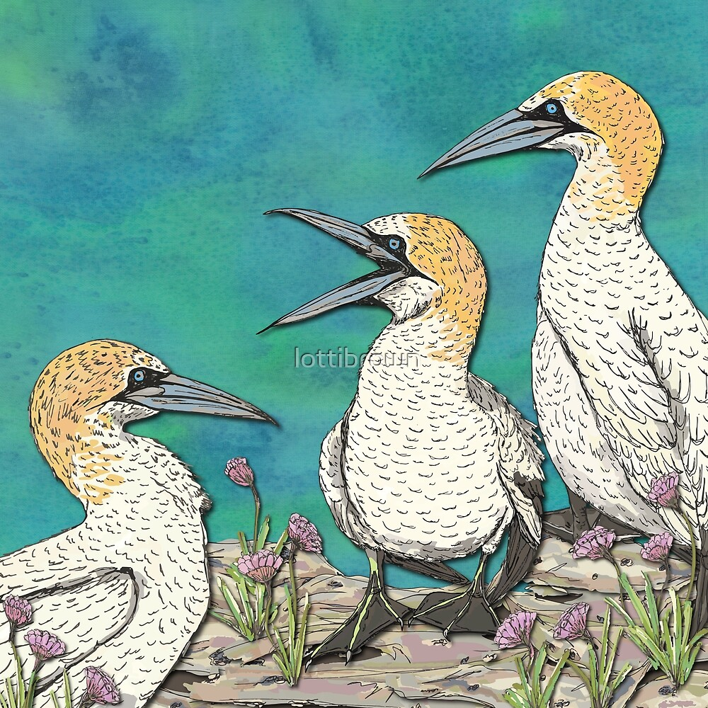 A Gaggle of Gannets by lottibrown