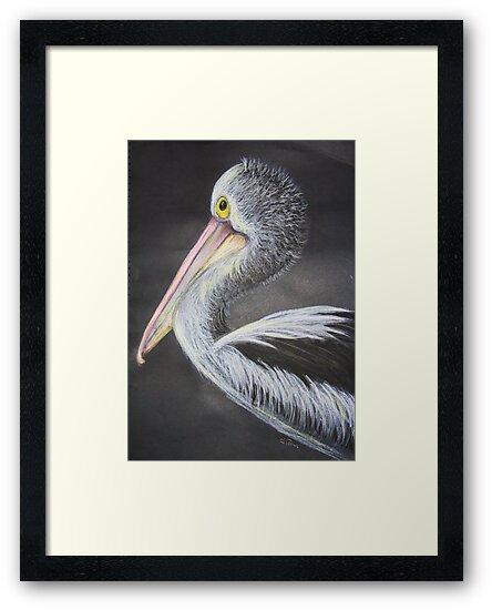 Portrait of a Pelican by Tam  Locke