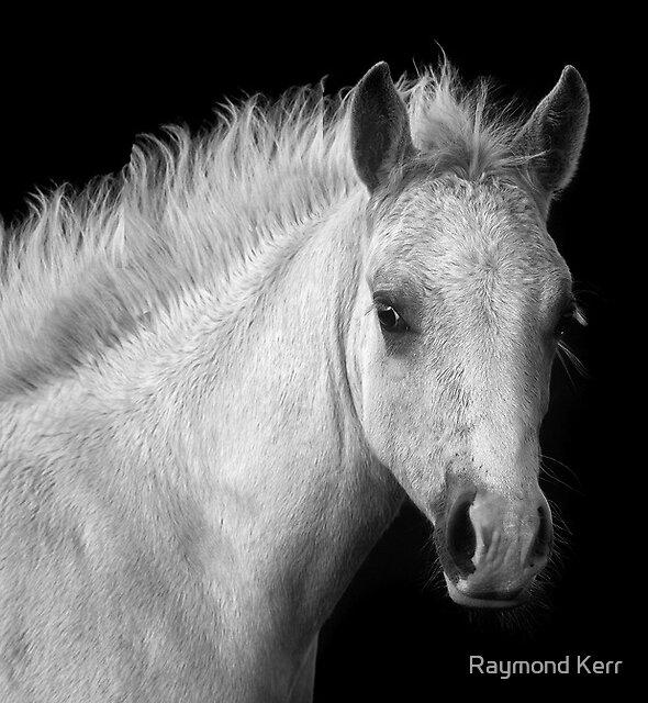 Son of Spirit by Raymond Kerr