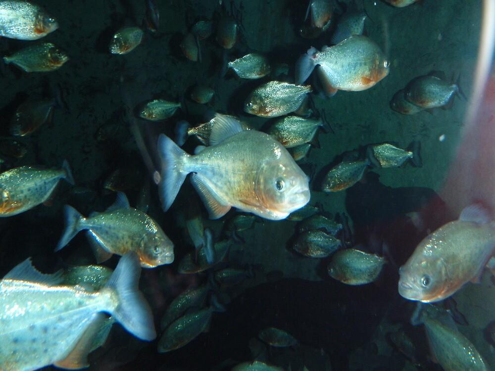 Piranha!!! by Stacey Sullivan