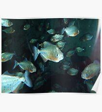 Piranha!!! Poster