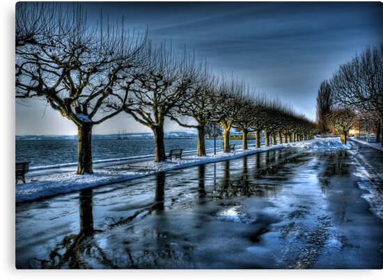 Trees of the Zugersee by Luke Griffin