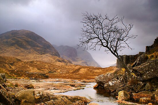 Lone Tree at Three Sisters (viewed 1841 times 4th Aug 2015) by Cliff Williams