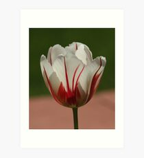 Filtering The Light - Featured Photo and Challenge Top Ten  Art Print