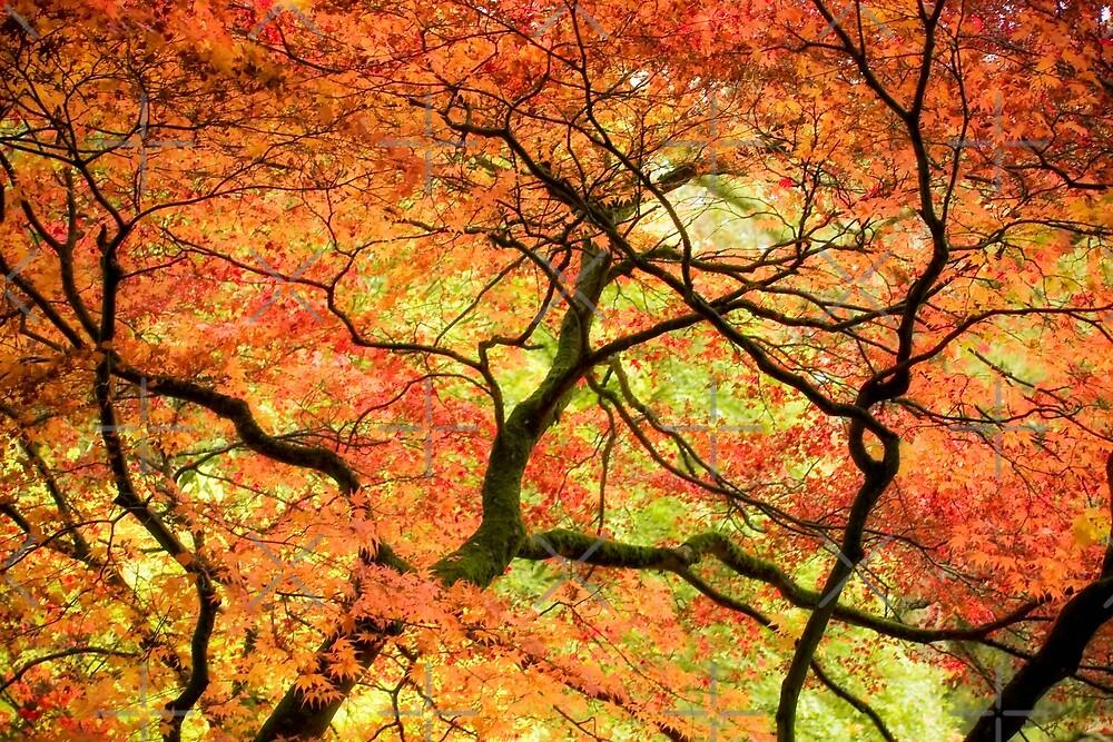 Autumn Closing In by heidiannemorris