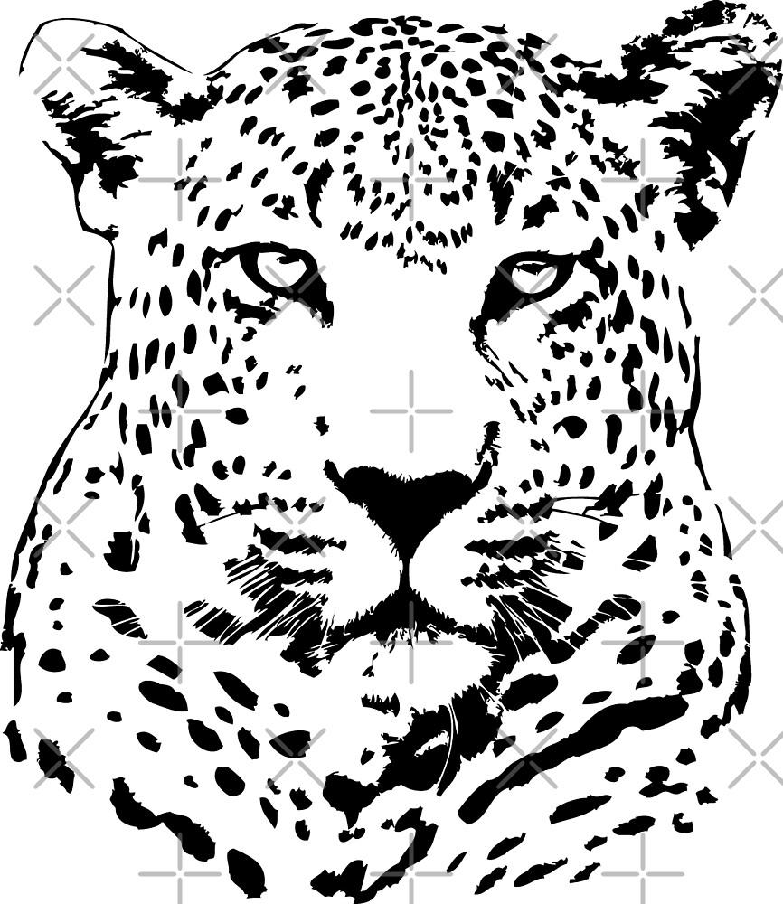 Leopard by Port-Stevens