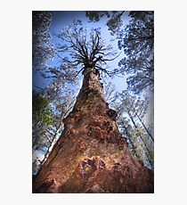 The Majestic Mountain Ash Photographic Print