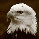 Regal  Eagle  by naturalnomad