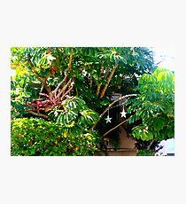 Lush foliage  Photographic Print