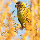 """Bird In Paradise"" - wild Nanday Conure in Largo, Florida by ArtThatSmiles"
