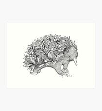 Botanical Echidna Art Print