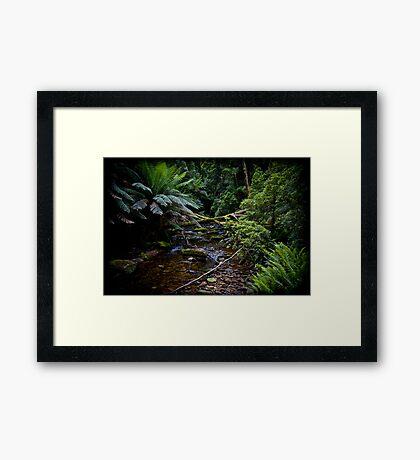 Rain Forrest creek Framed Art Print
