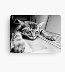 Sleeping @ Work Canvas Print